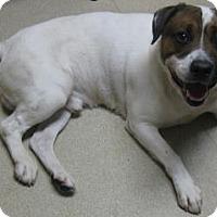 Adopt A Pet :: Cooper - Gary, IN