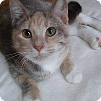 Adopt A Pet :: Peaches (6-month girl) - Witter, AR