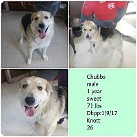 Adopt A Pet :: Chubbs - Hazard, KY