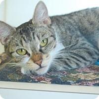 Adopt A Pet :: Prynn - Bradenton, FL
