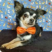 Adopt A Pet :: Gavin - Troutville, VA