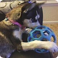 Adopt A Pet :: Kala - Clearwater, FL