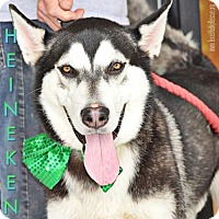 Adopt A Pet :: Heineken - Carrollton, TX
