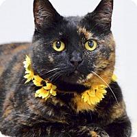 Adopt A Pet :: Callie - Dublin, CA