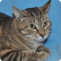 Adopt A Pet :: Salad - Windsor, VA