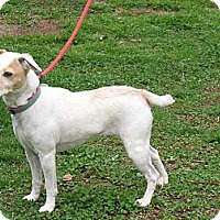 Adopt A Pet :: Suzie - hartford, CT
