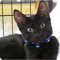 Adopt A Pet :: Bear - Port Republic, MD