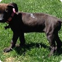 Adopt A Pet :: Baby Girl Socks - Marlton, NJ