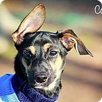 Adopt A Pet :: Corky - Albany, NY