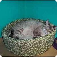 Adopt A Pet :: Brando - Secaucus, NJ
