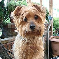 Adopt A Pet :: Mack - South Amboy, NJ
