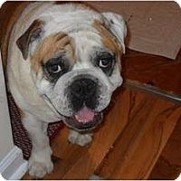 Adopt A Pet :: Bullett - Winder, GA