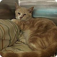 Adopt A Pet :: Teagan - Pittstown, NJ