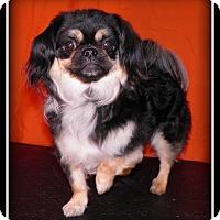 Adopt A Pet :: Gouda - Indian Trail, NC