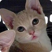 Adopt A Pet :: Flower - Irvine, CA