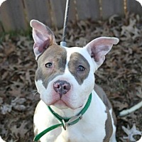 Adopt A Pet :: LILO - Bedford, KY