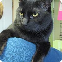 Adopt A Pet :: Nikita - Reeds Spring, MO