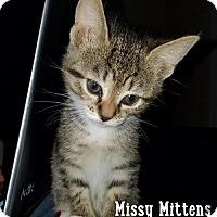 Adopt A Pet :: Missy Mittens - Merrifield, VA