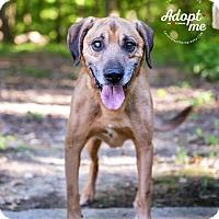 Adopt A Pet :: Haas - Cincinnati, OH