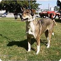 Adopt A Pet :: Brendan - Winnsboro, SC