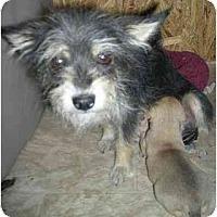 Adopt A Pet :: CHA CHA - Fowler, CA