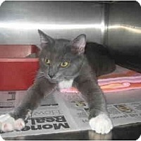 Adopt A Pet :: Pooters - Lombard, IL