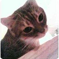 Adopt A Pet :: Disco Peter - Proctor, MN
