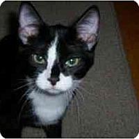 Adopt A Pet :: Tabor - Milwaukee, WI