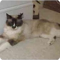Adopt A Pet :: Baby in California - Keizer, OR