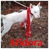 Adopt A Pet :: Midora - Columbia, SC