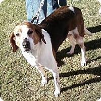 Adopt A Pet :: Polka - Midlothian, VA