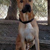Adopt A Pet :: Rocky - San Martin, CA