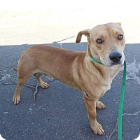 Adopt A Pet :: Ramone - Sugar Grove, IL