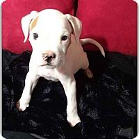 Adopt A Pet :: Celine - DeForest, WI