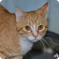 Adopt A Pet :: Angelo - Ottumwa, IA