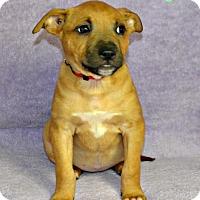 Adopt A Pet :: Georgia - Yreka, CA