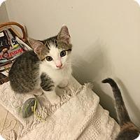 Adopt A Pet :: Nolan - Mount Pleasant, SC