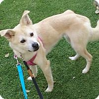 Adopt A Pet :: LOKI - La Mirada, CA