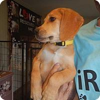 Adopt A Pet :: Wendi - Koontz Lake, IN