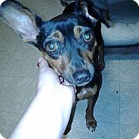 Adopt A Pet :: Brady - Springvale, ME