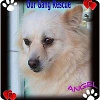Adopt A Pet :: Angel - 2 - Cincinnati, OH