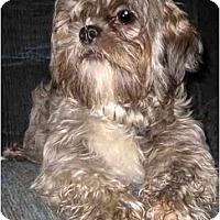 Adopt A Pet :: Buddy - Mays Landing, NJ