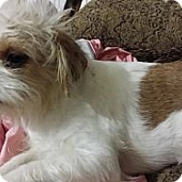 Adopt A Pet :: Bette - Pflugerville, TX