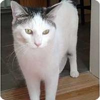 Adopt A Pet :: Whitey - Alexandria, VA