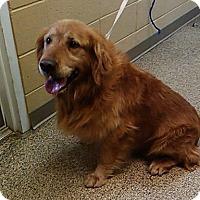 Adopt A Pet :: Jake Sr. - New Canaan, CT