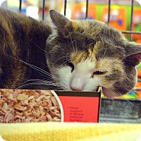 Adopt A Pet :: Coco - Pittstown, NJ