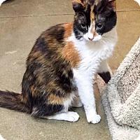 Adopt A Pet :: Skylar - McDonough, GA