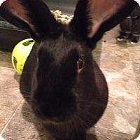 Adopt A Pet :: Raven - Moneta, VA