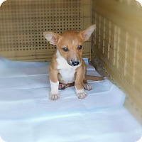 Adopt A Pet :: Hunny - mooresville, IN