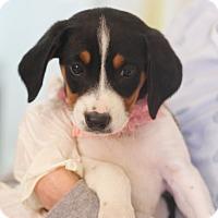 Adopt A Pet :: Vivian - Dalton, GA